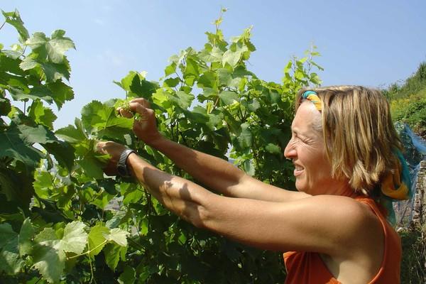 Tübinger Sonnenhalde - Weinbergspaziergang mit Weinprobe