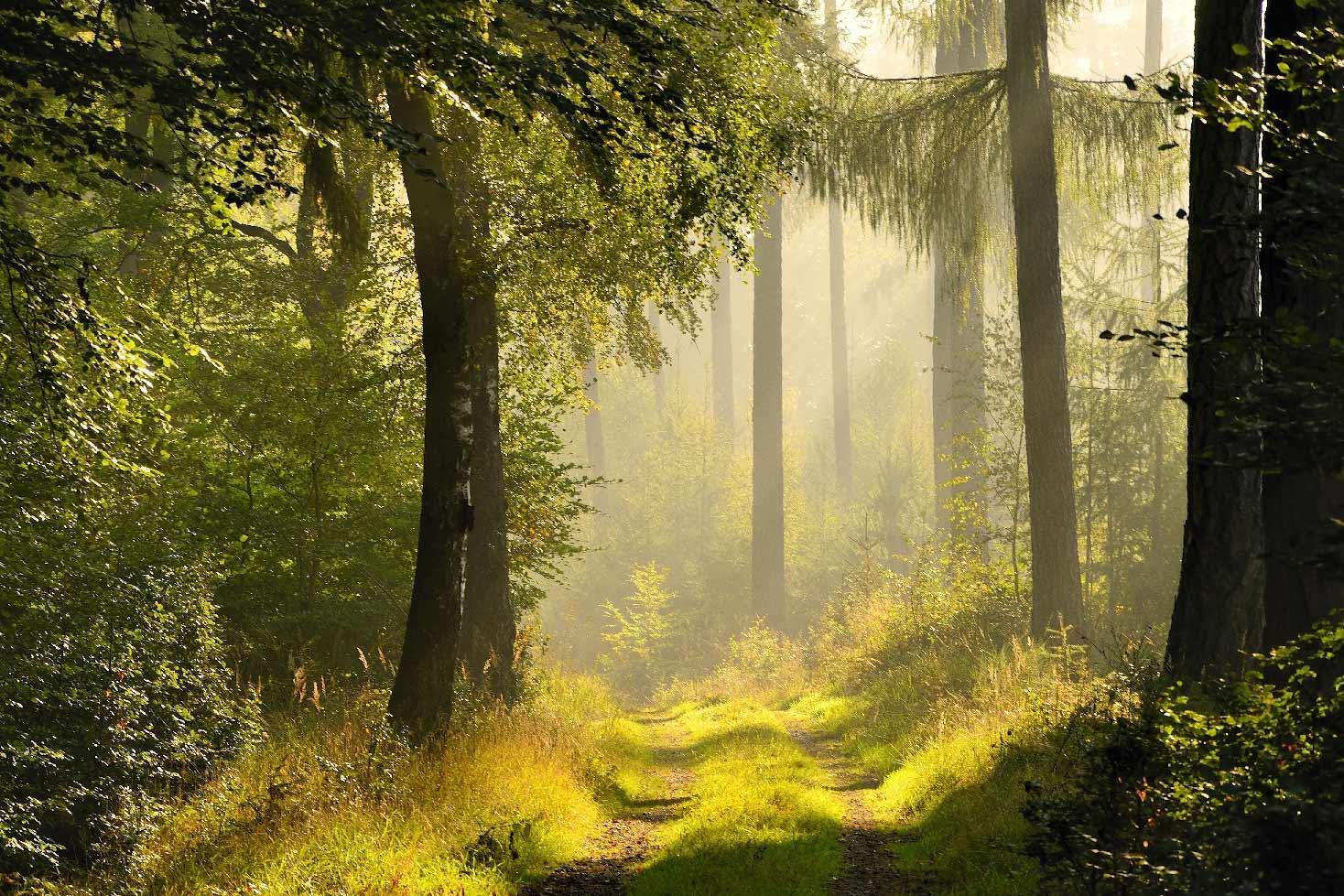 Naturpark Schönbuch