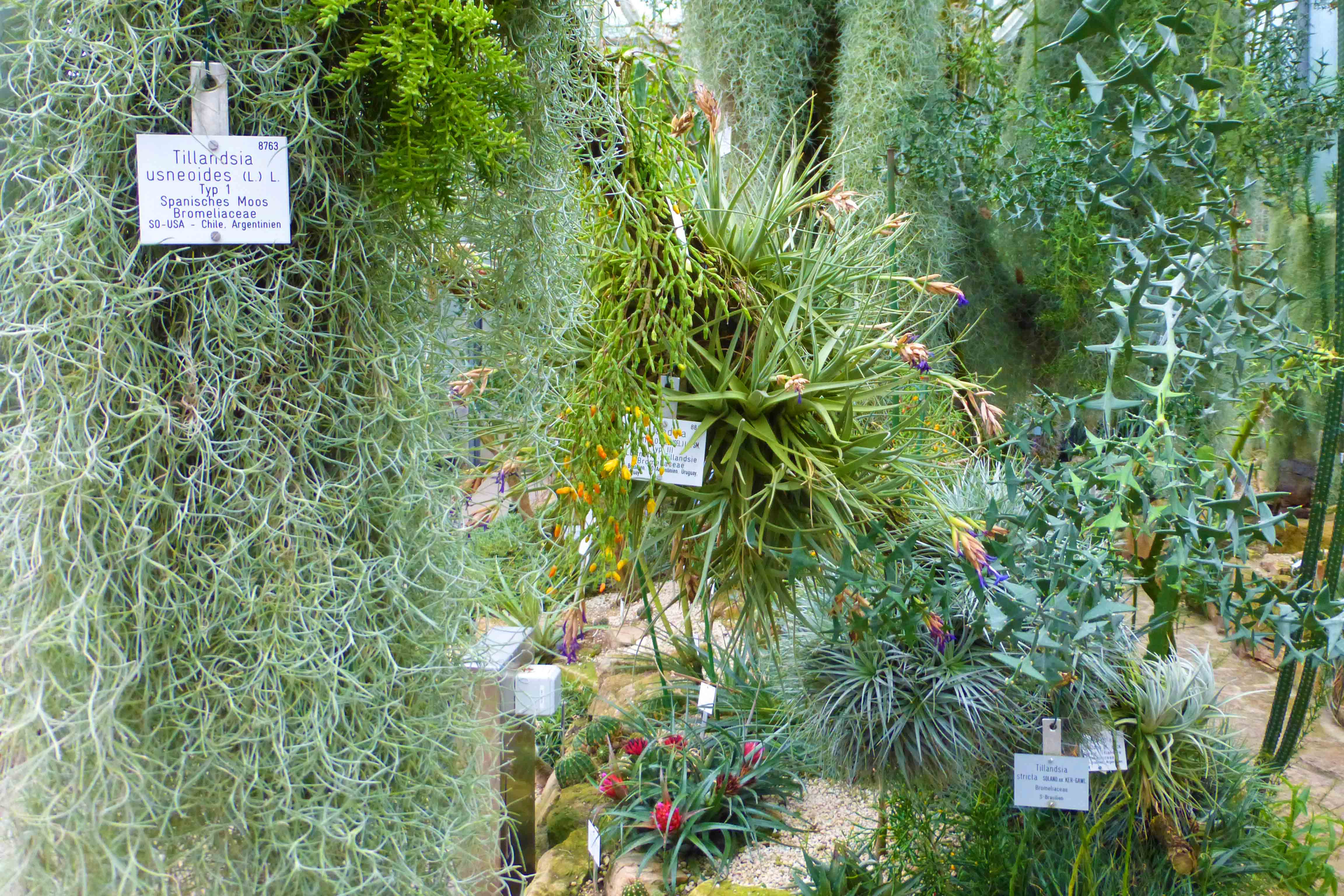 Botanischer Garten in Tübingen