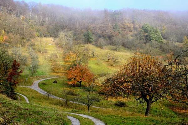 Waldspaziergang durch den Schönbuch